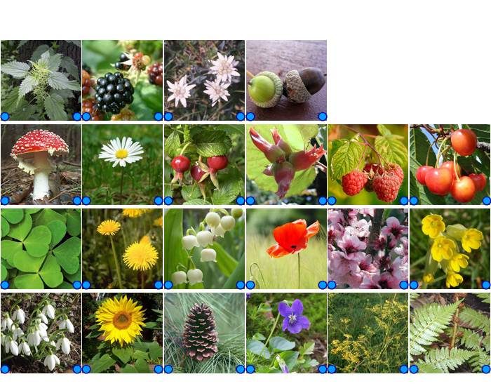 Plants and Flowers - German/English