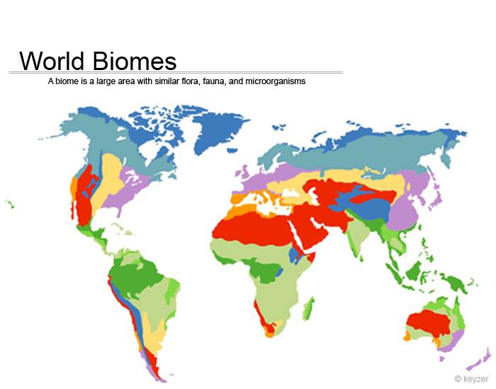 World biomes purposegames gumiabroncs Image collections