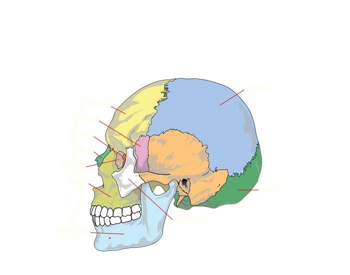 The human skull purposegames ccuart Images