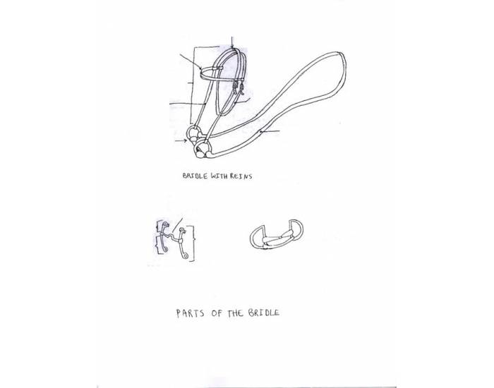 Parts Of The Bridle