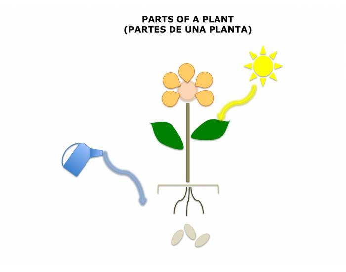 Parts of a Plant 1