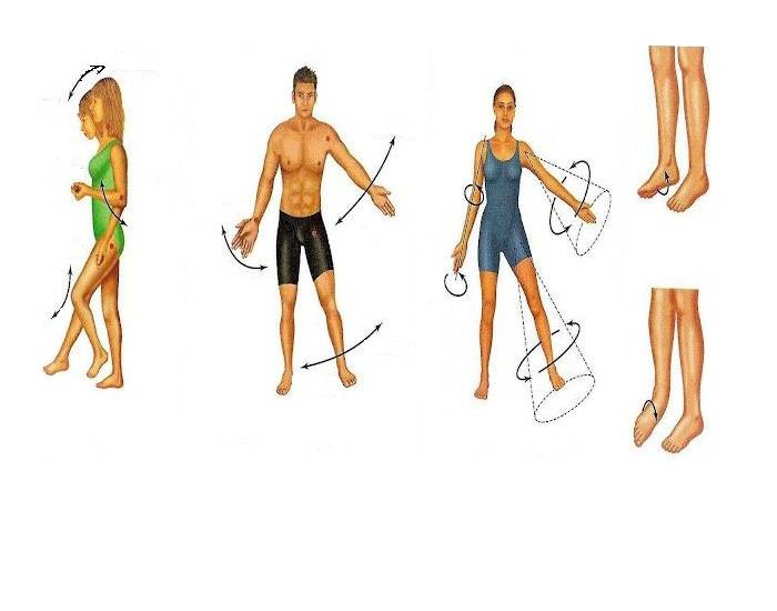 joints and body movements Body movements and articulations classification of synovial joints all body movements are based on the anatomical positionsynovial joints are classified.