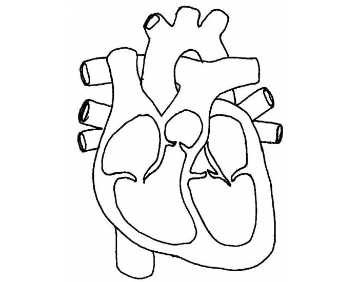 Basic Heart Diagram