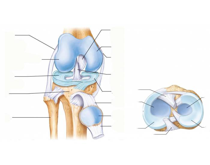 Inside the Knee Joint