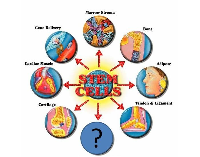 ethics of stem cell research essay The most downloaded articles from stem cell research in the received in a particular year by papers published in the stem cell-derived.