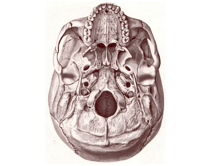 superior view of the base of the skull anatomy kenhub - 700×550