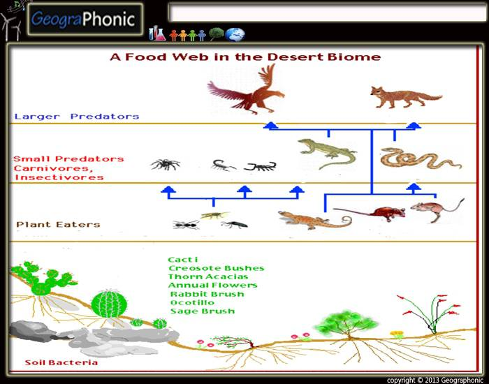 biome desert and food chain essay Academic essay writing service desert biome, chaparral or scrub taiga = coniferous forests, grassland  a food source that attracts many whales.