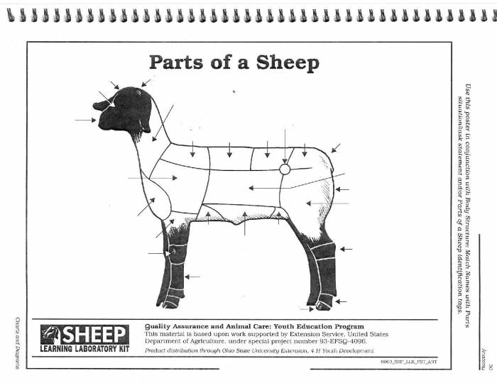 External Parts Of The Sheep Purposegames