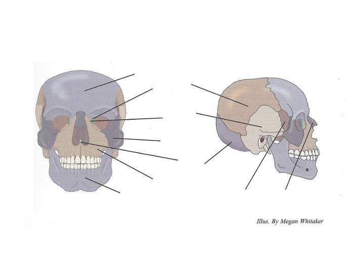 How to learn the skull bones games