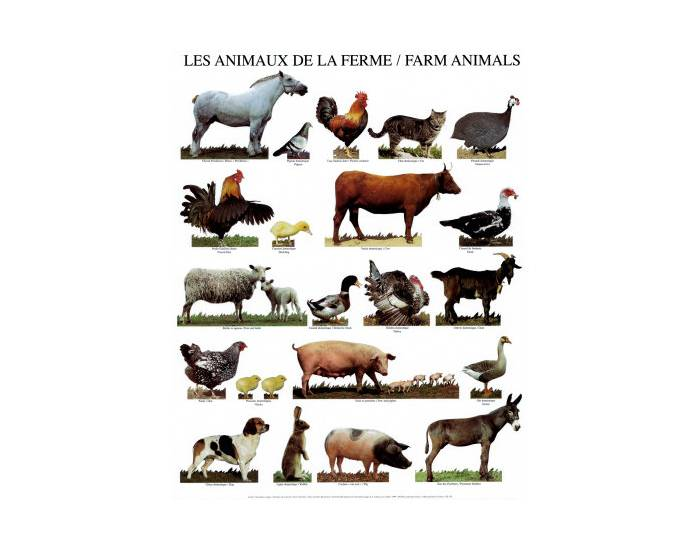 French Animals