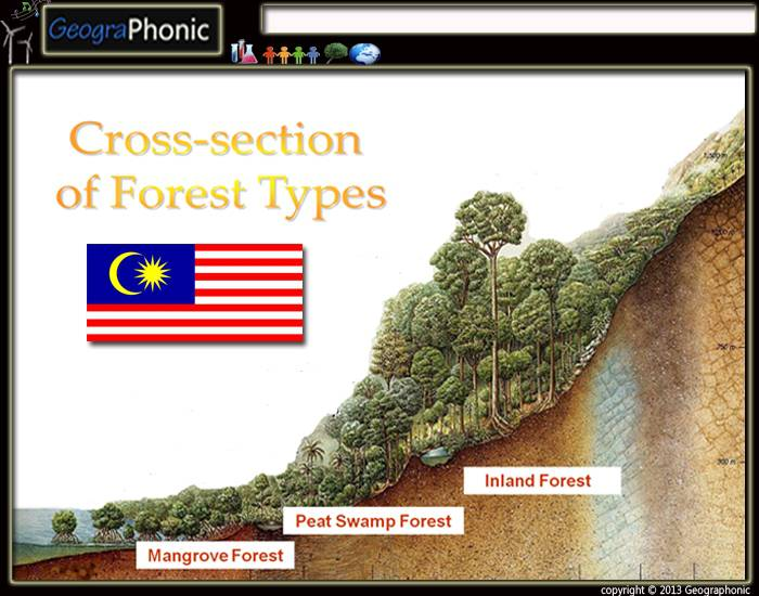 cross-section of forest types in malaysia
