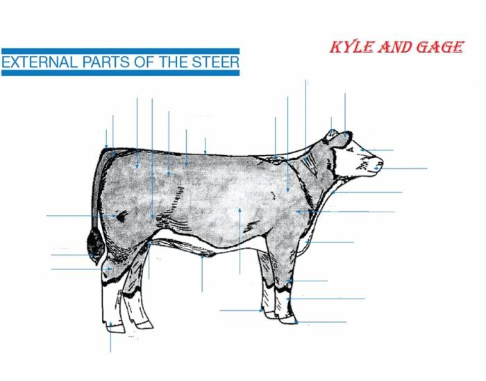 external parts of a steer - PurposeGames