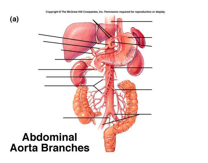 Game Statistics Arteries Of The Abdominal And Pelivic Region