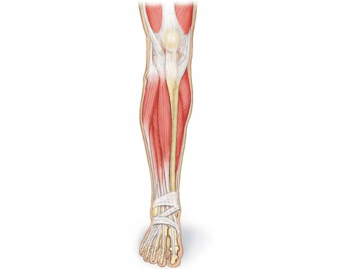 Lower extremity anatomy games to learn