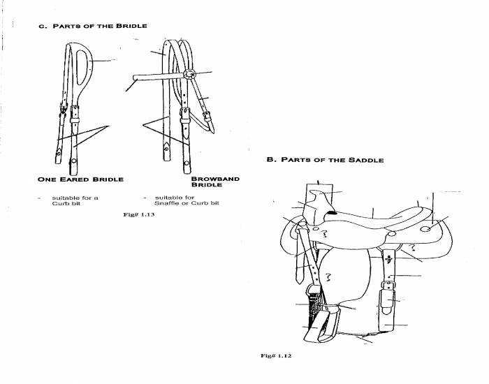 Parts of the Western Saddle/Bridle