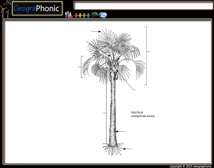 Game Statistics - Anatomy of a Fan Palm Tree - PurposeGames