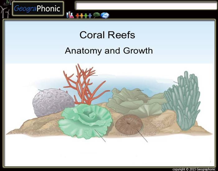 Growth Forms of Coral