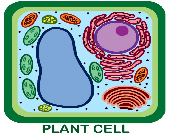 plant cell dot quiz