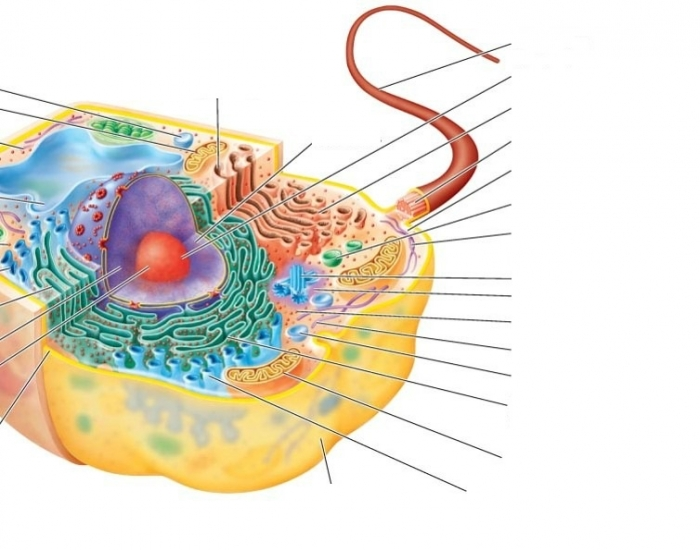 vesicle in a cell - 700×550