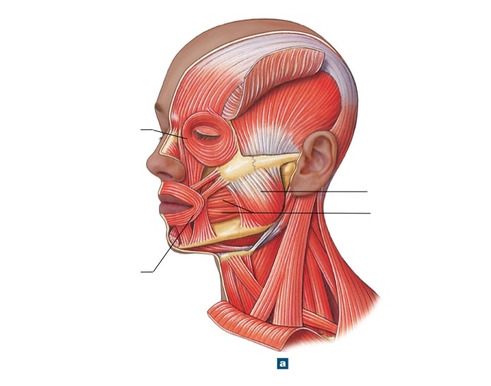 Are correcting facial muscle banding necessary