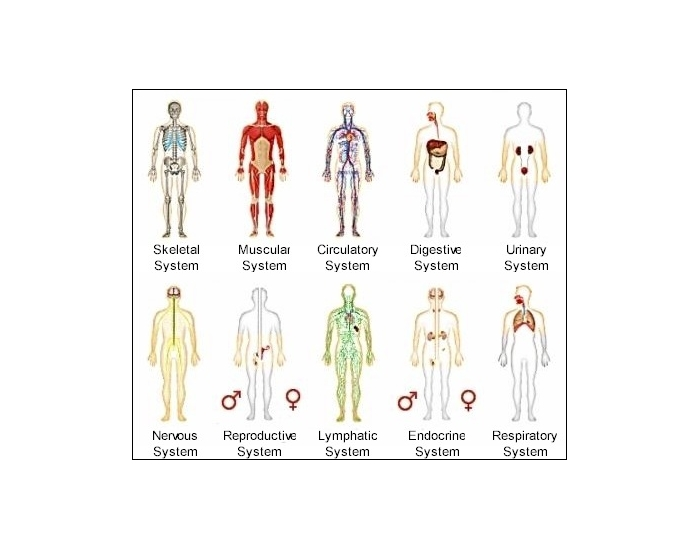 Body System with Structure and Function