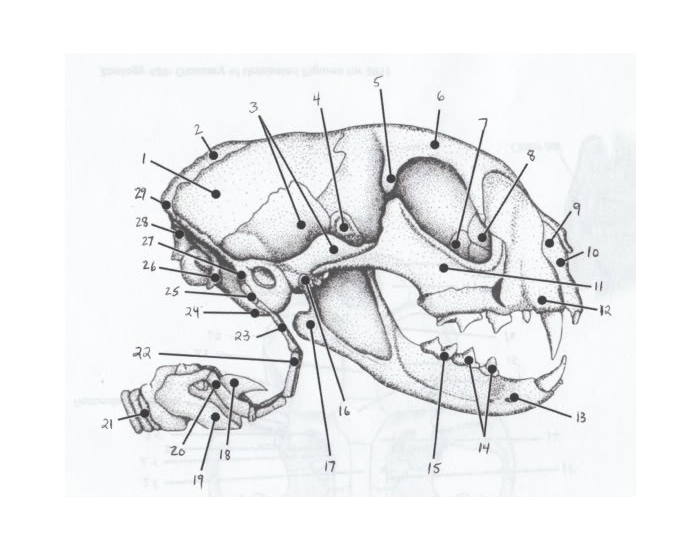 Cat Skull Diagram Quiz Block And Schematic Diagrams