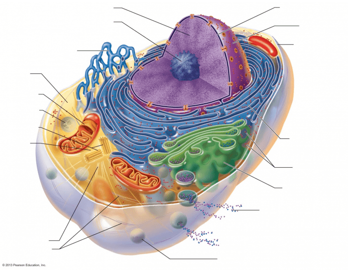 Structure of the generalized cell