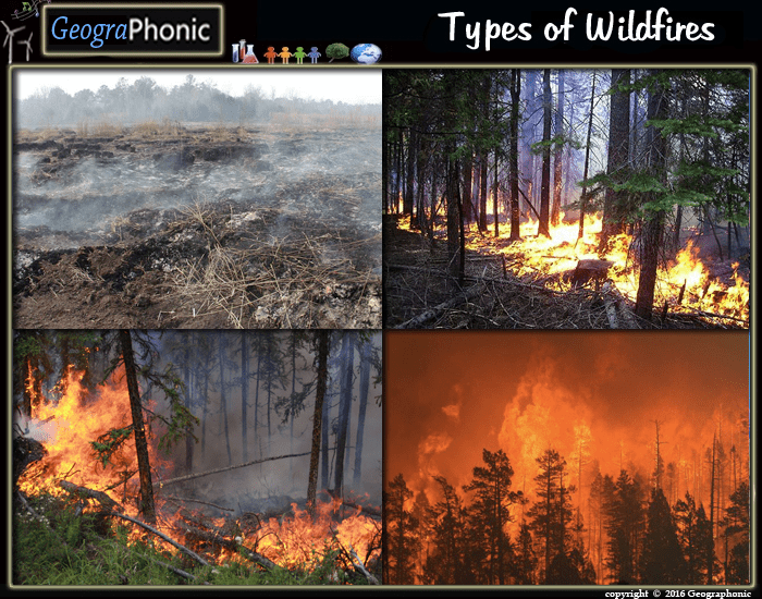 Types of Wildfires