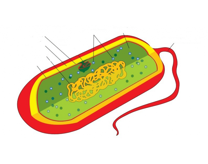bacteria and d energy e