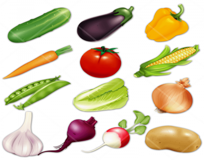 My Favorite Vegetables