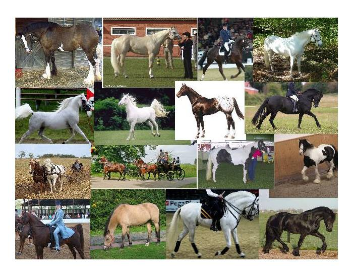 Well Known Horse Breeds