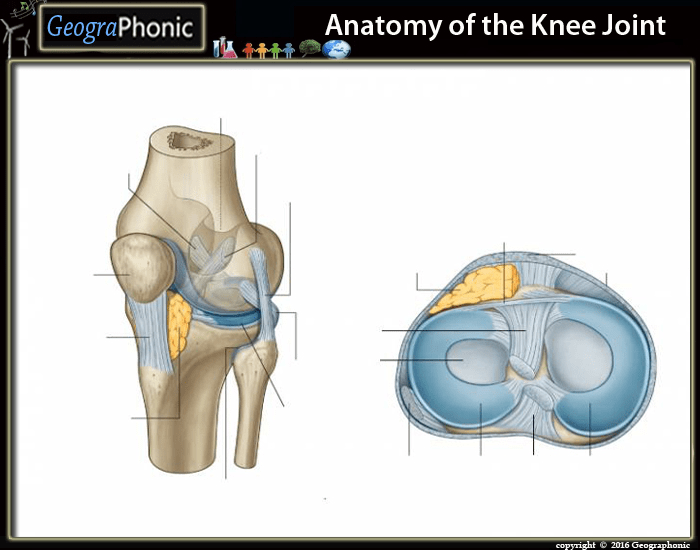 How To Play 20 Questions >> Anatomy of the Knee joint