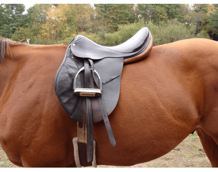 Quiz about horse tack - MATCHING QUIZ