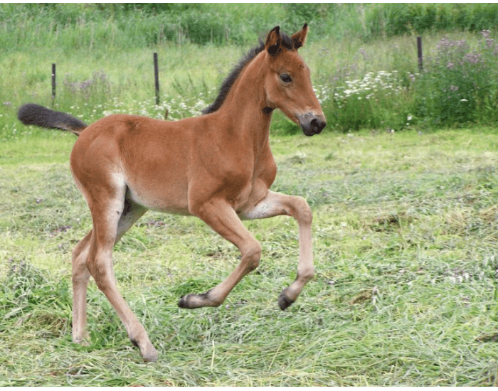 How are horses aged? - MATCHING QUIZ