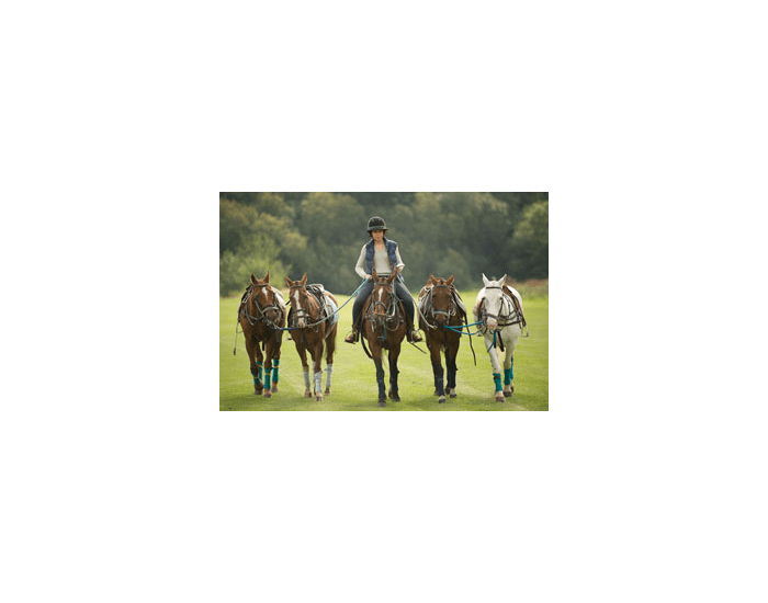 Leading and standing horses up - MATCHING QUIZ