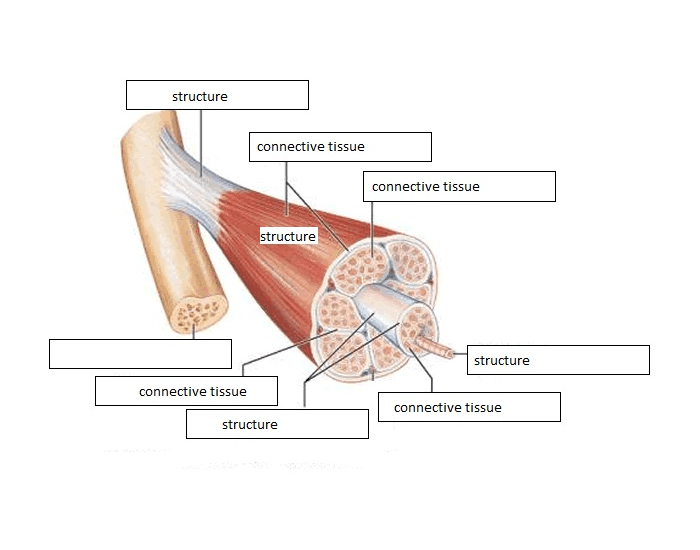 Muscle Structure Labeling