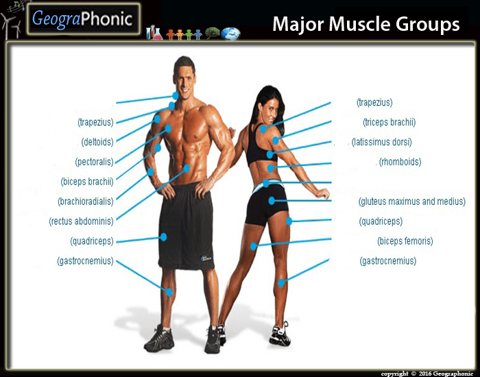 Largest Muscle Group 106