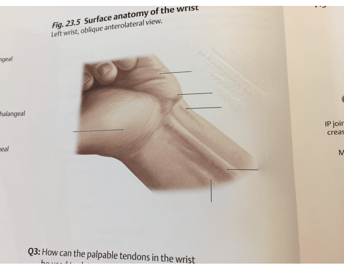 Ventral surface anatomy of hand - PurposeGames