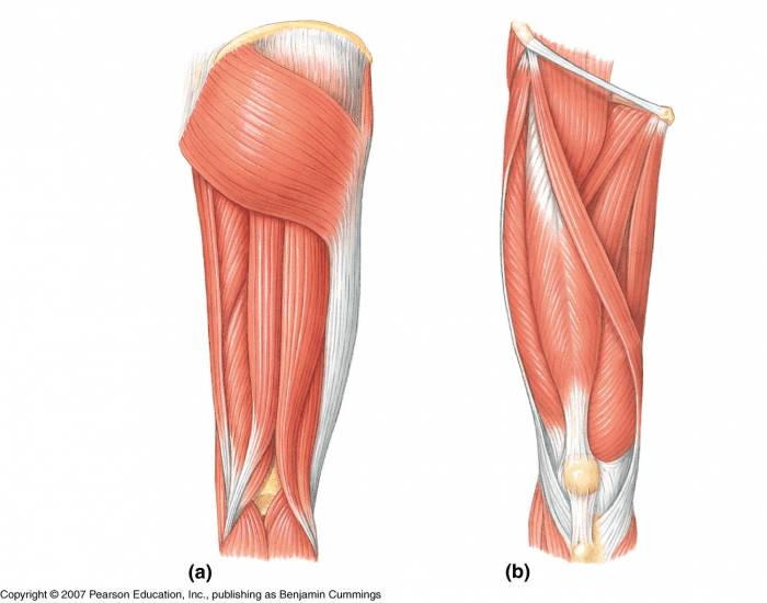 Upper Leg Muscles- Yarna and Limey (; <3