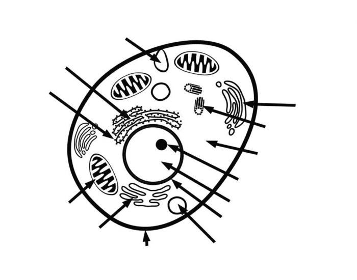 m  prokaryotic and eukaryotic cells coloring coloring pages