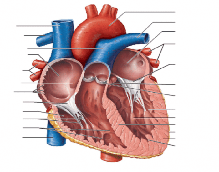 the effects of playing video games on the human heart An argument in favor of watching television and playing video games most  times in life  2 pages the effects of playing video games on the human heart.