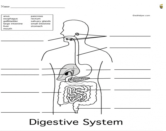 Don\'t believe the LIES about Digestive system multiple choice test ...