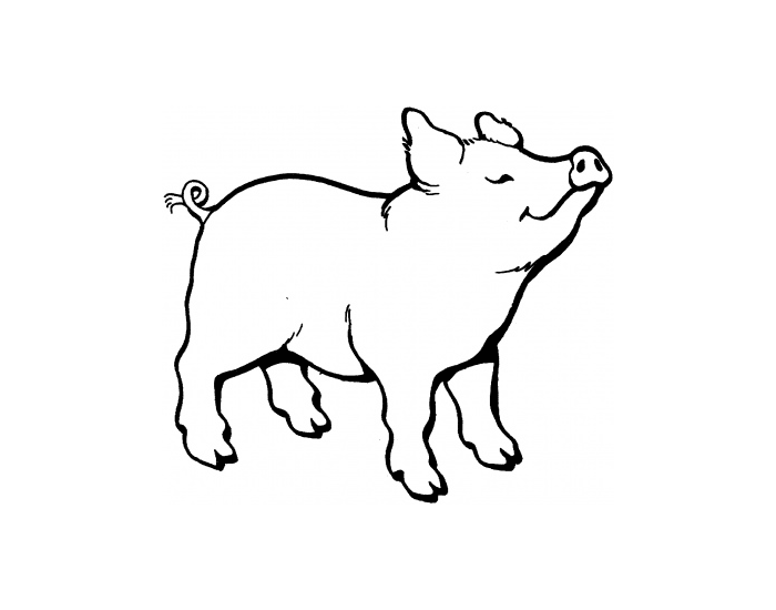 Game Statistics - Swine External Anatomy - PurposeGames