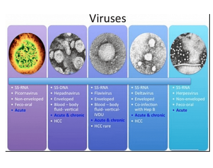 an analysis of the six types of viral infections of the hepatitis disease