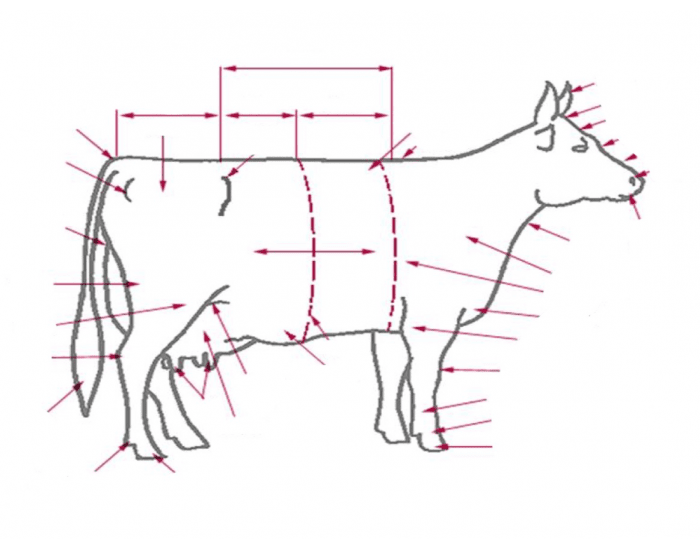 Dairy Cattle Parts 2