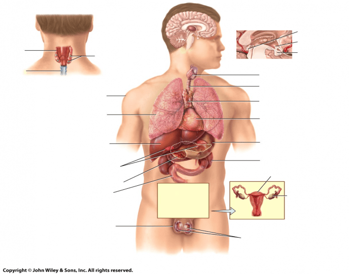 endocrine system physiology worksheet Start studying anatomy & physiology: endocrine system learn vocabulary, terms, and more with flashcards, games, and other study tools.