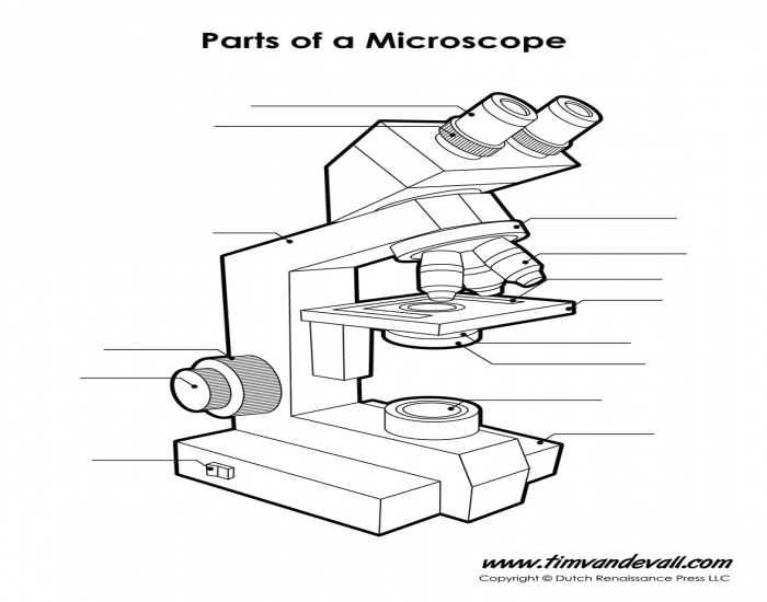 binocular compound microscope diagram