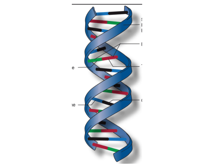 name the type of nucleic acid and its parts