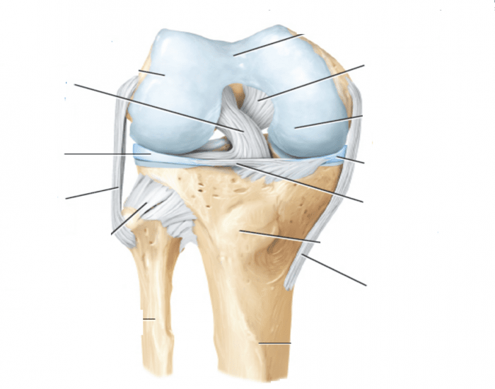 Labeling the knee joint purposegames ccuart Images