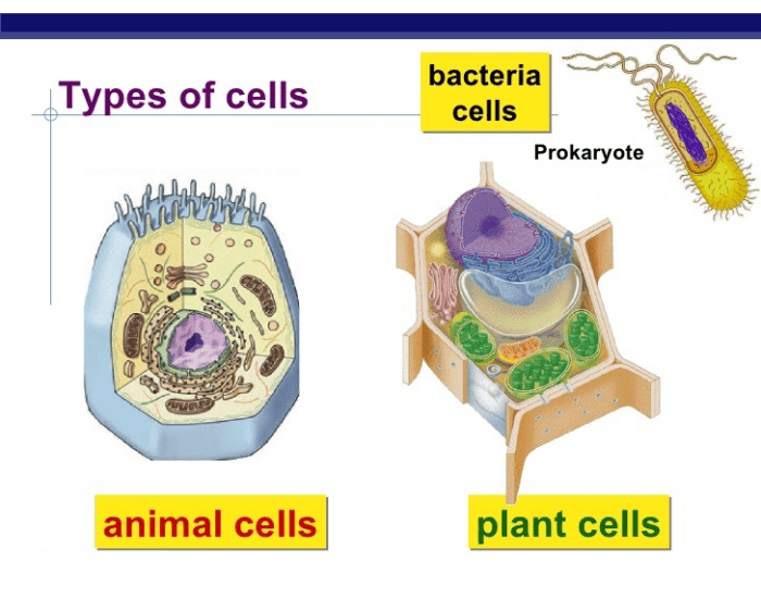 Unit 2 - Eukaryote and Prokaryote Cells